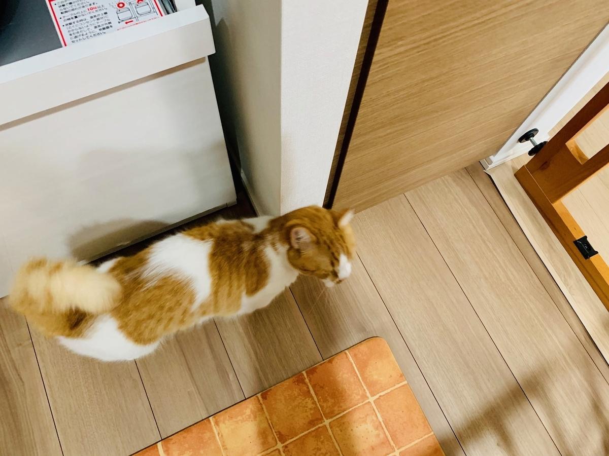 ご飯の棚の前でウロウロするるるちゃん1