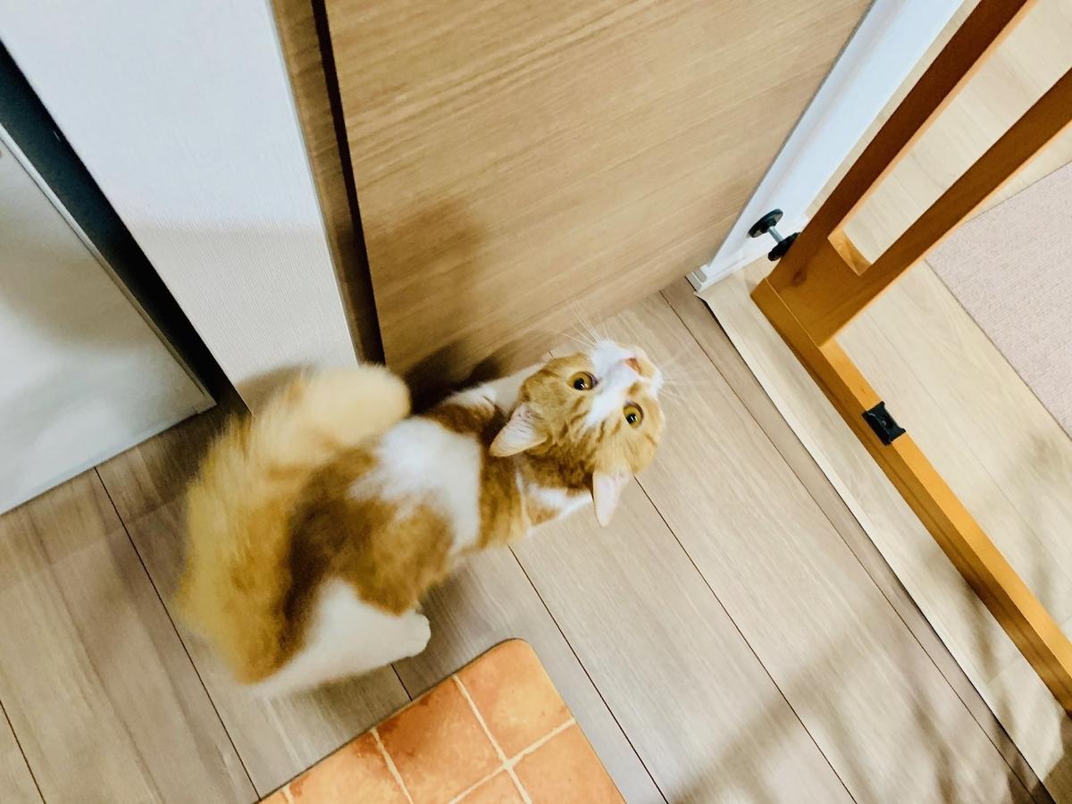 ご飯の棚の前でウロウロするるるちゃん2
