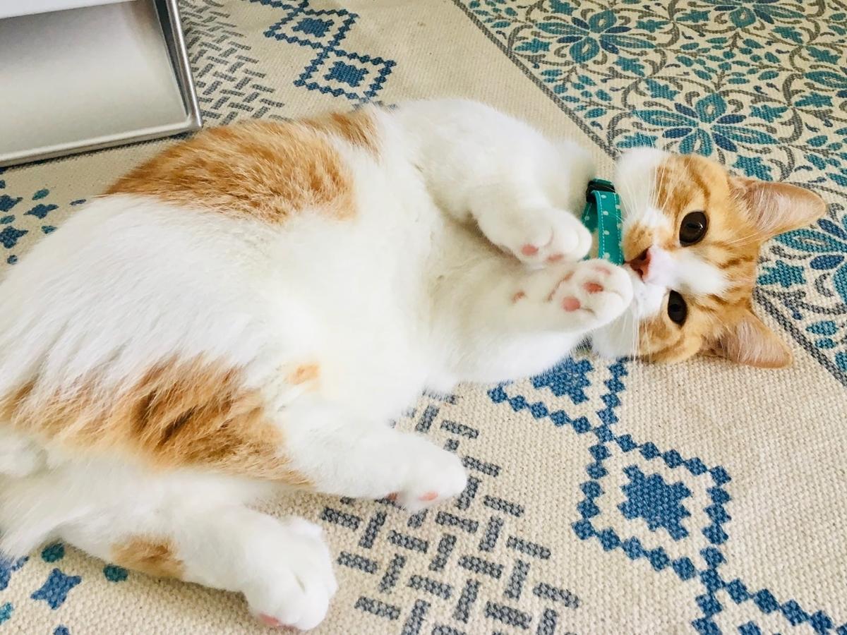 子猫時代の首輪をつけたるるちゃん