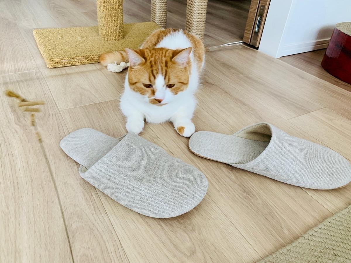 Cat Dancerで遊ぶるるちゃん5