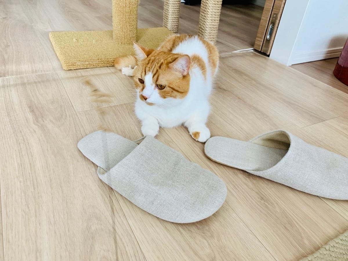 Cat Dancerで遊ぶるるちゃん4