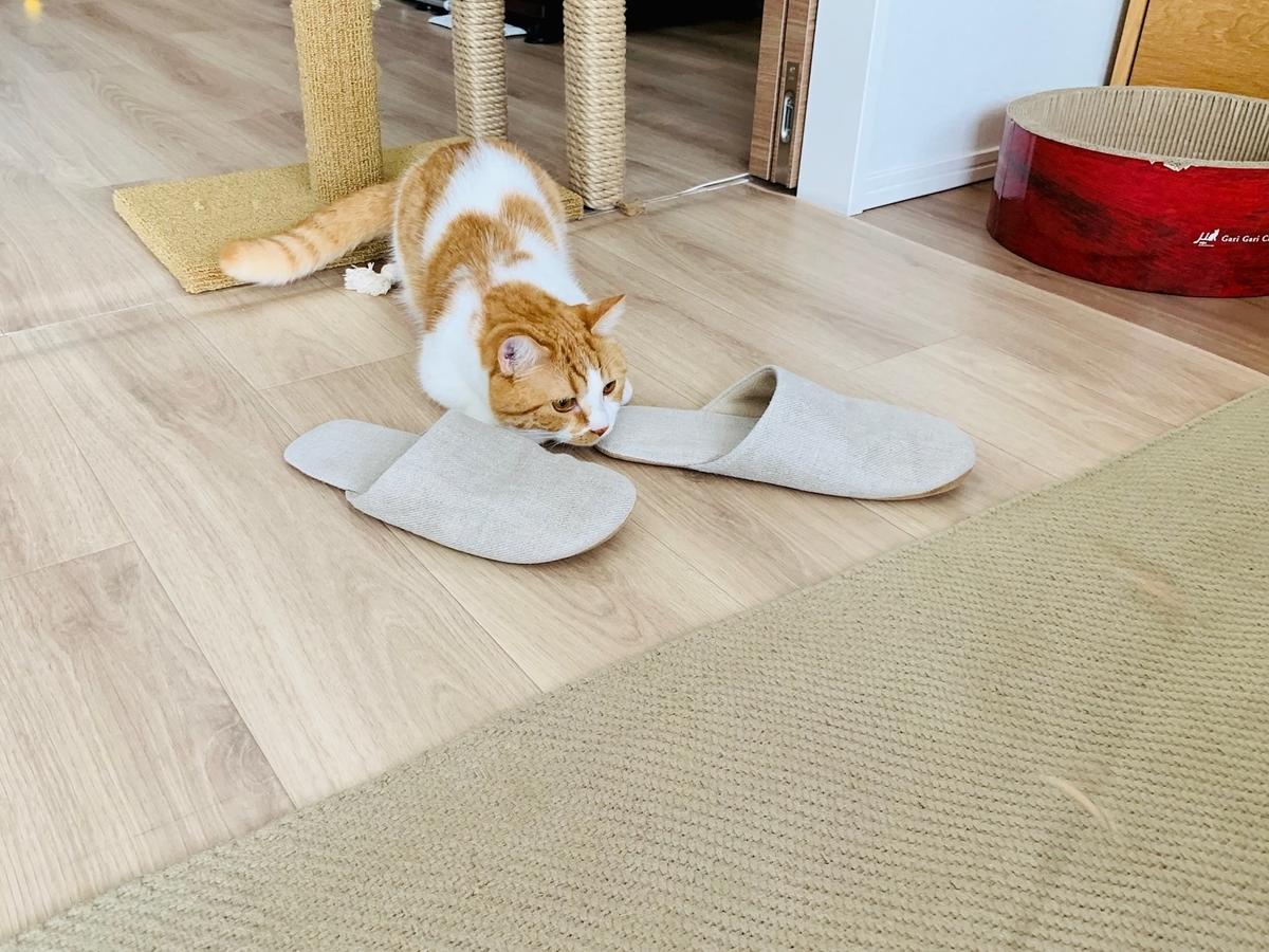 Cat Dancerで遊ぶるるちゃん3