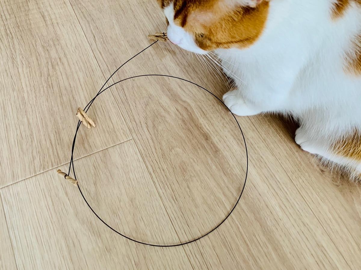 Cat Dancerとるるちゃん