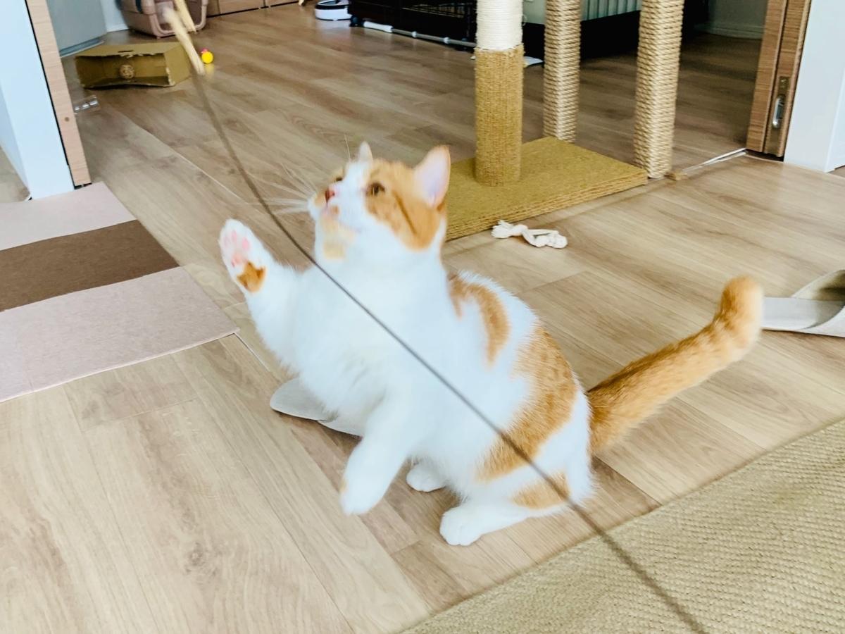 Cat Dancerで遊ぶるるちゃん1