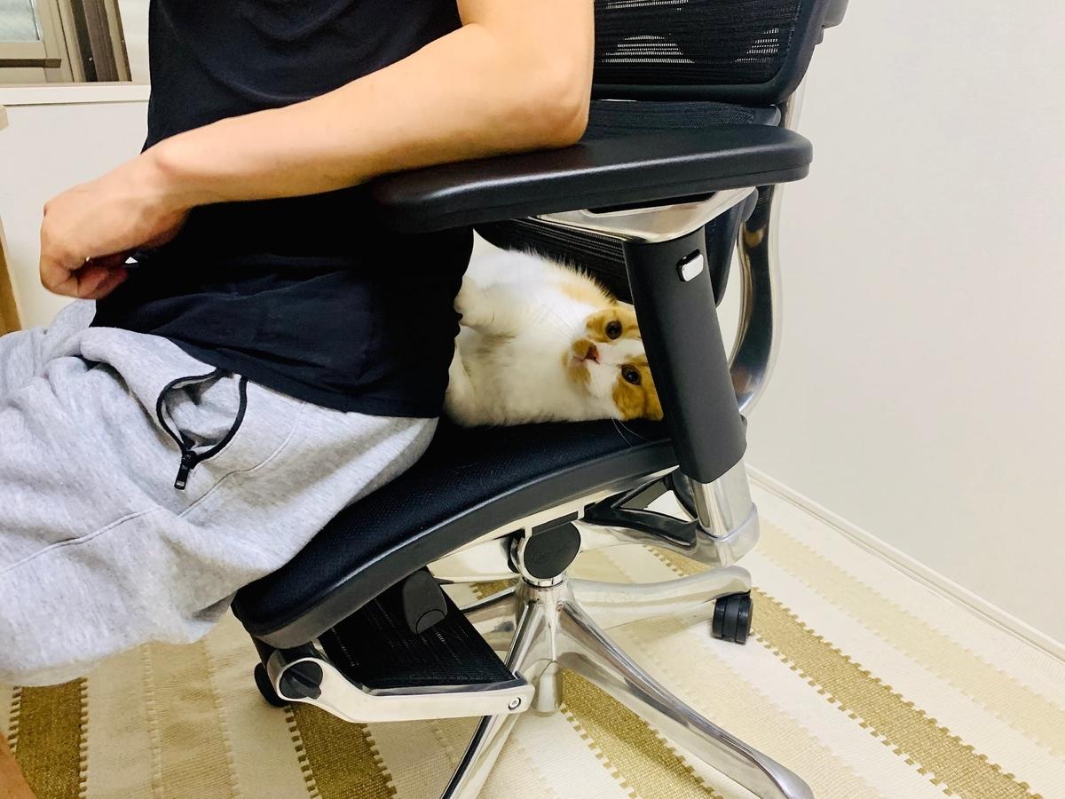 るるちゃんと椅子を分け合う夫3