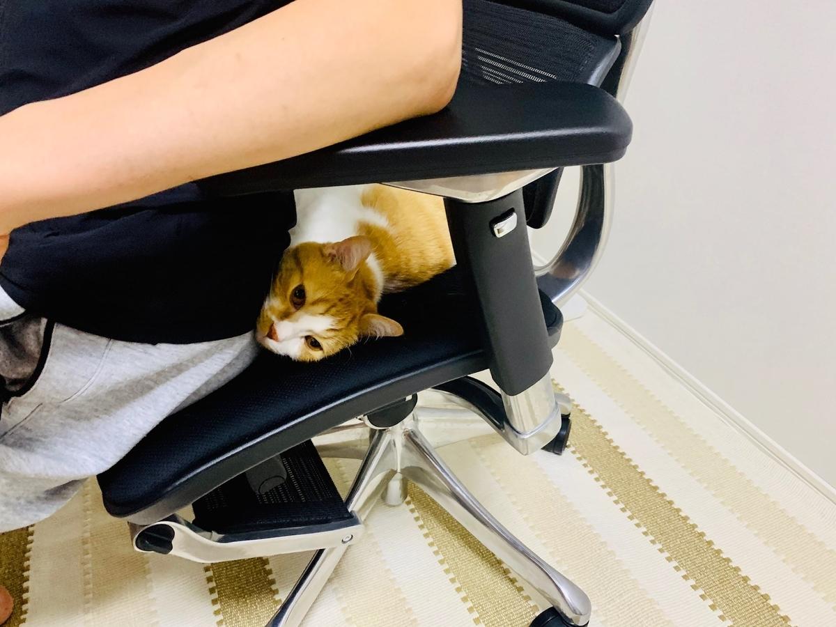 るるちゃんと椅子を分け合う夫4