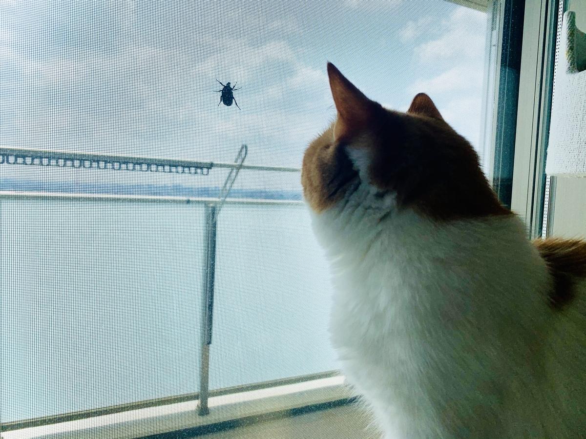 虫を見つめるるるちゃん1