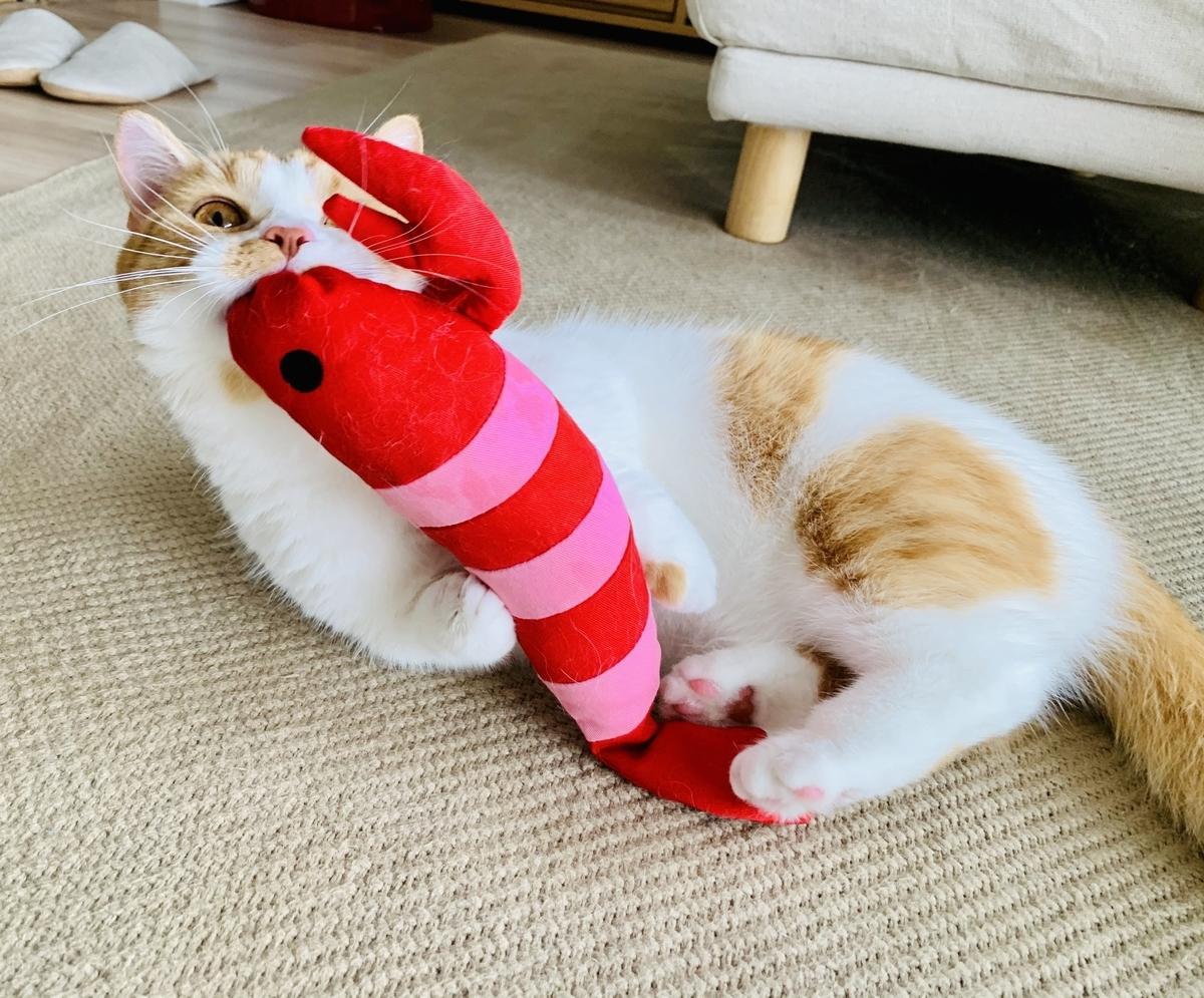 えびのおもちゃではじけるるるちゃん