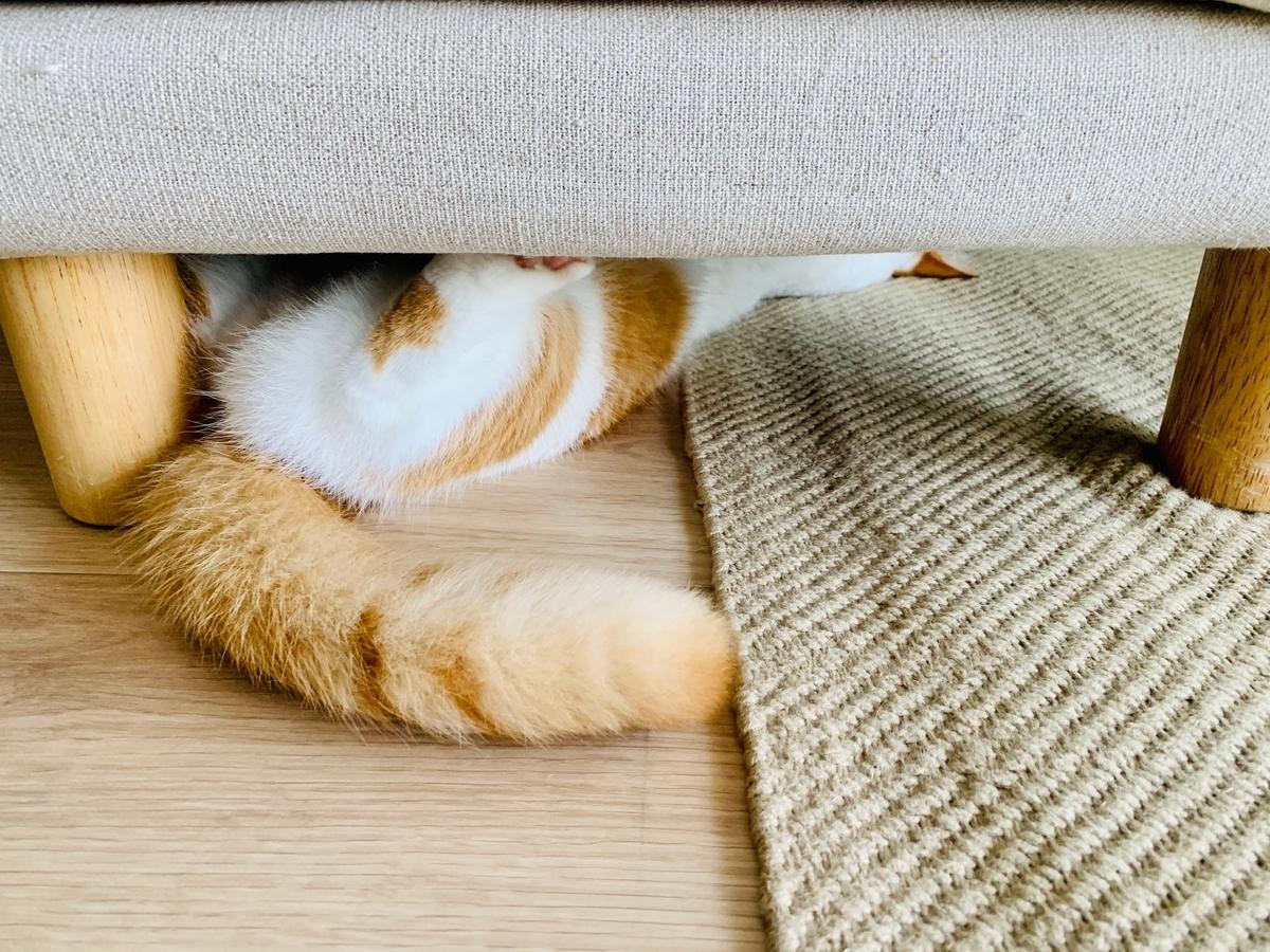 ソファのオットマンの下に隠れるるるちゃん5