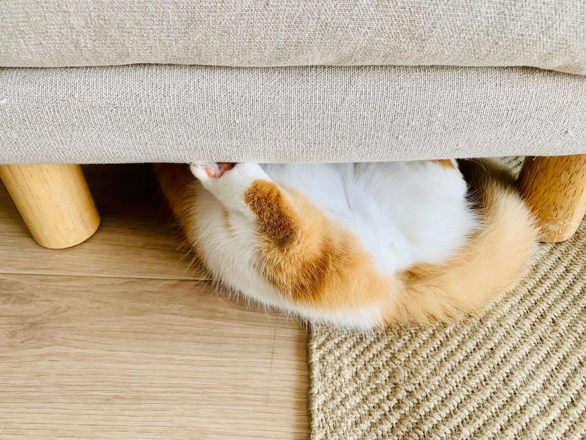 ソファのオットマンの下に隠れるるるちゃん4