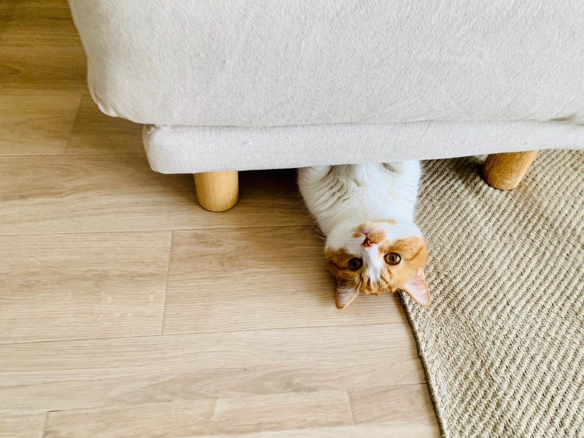 ソファのオットマンの下に隠れるるるちゃん7