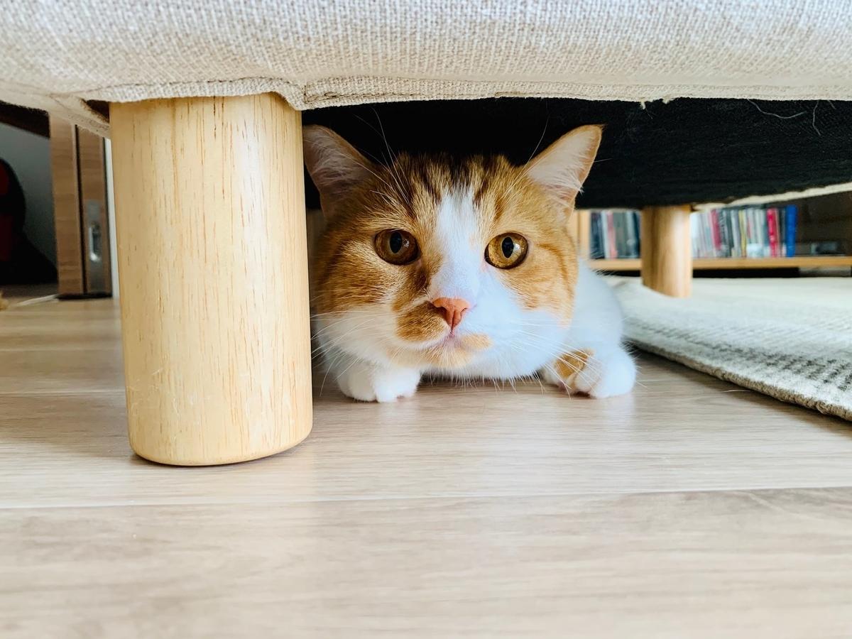 ソファのオットマンの下に隠れるるるちゃん1