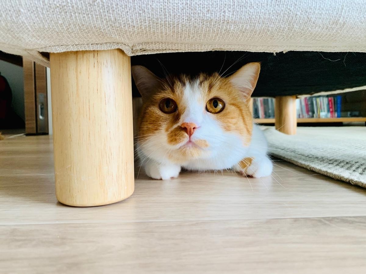ソファのオットマンの下に隠れるるるちゃん3