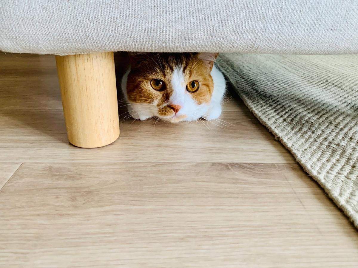 ソファのオットマンの下に隠れるるるちゃん2