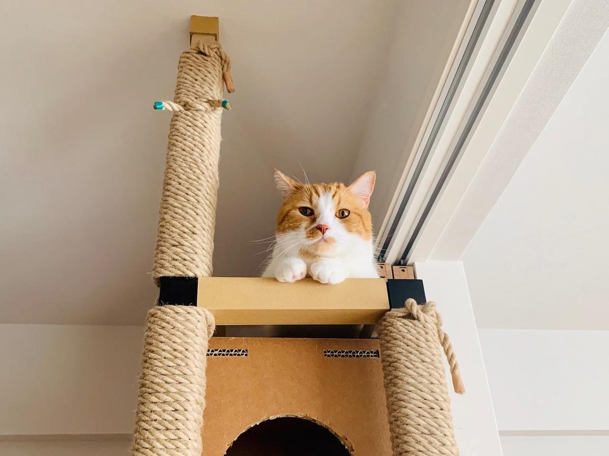 キャットタワーの上から見守るるるちゃん2