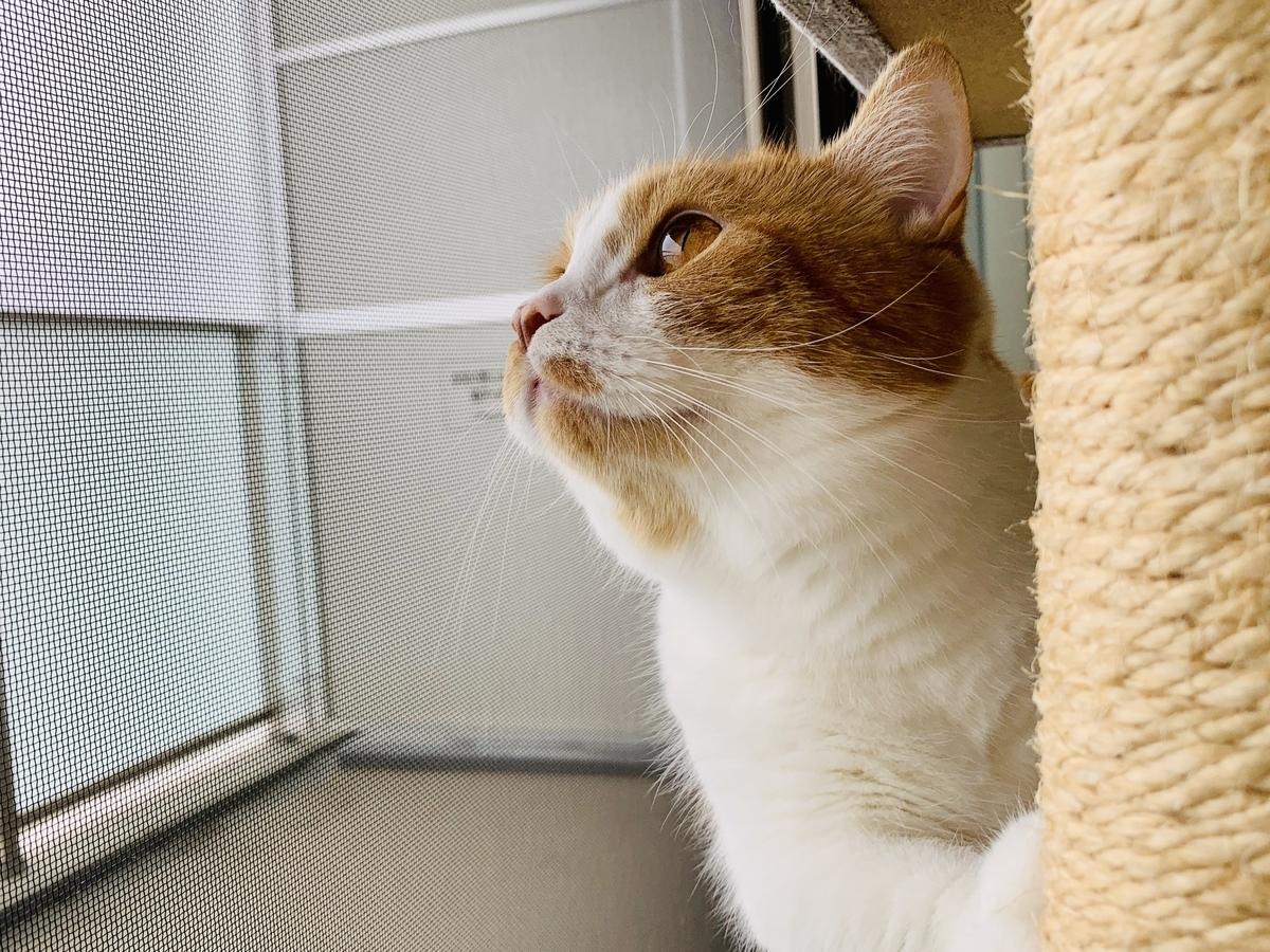 外を眺めるるるちゃん