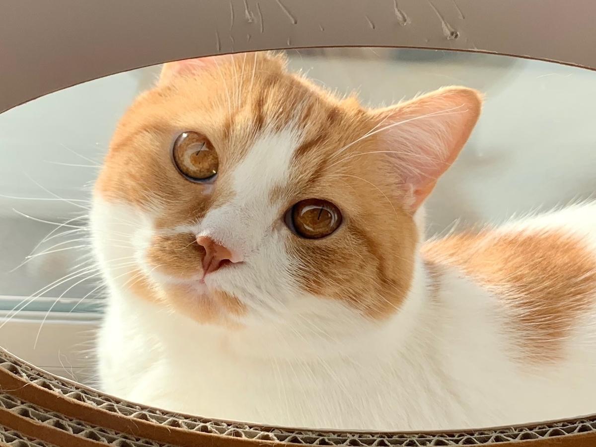 綺麗なるるちゃんの瞳