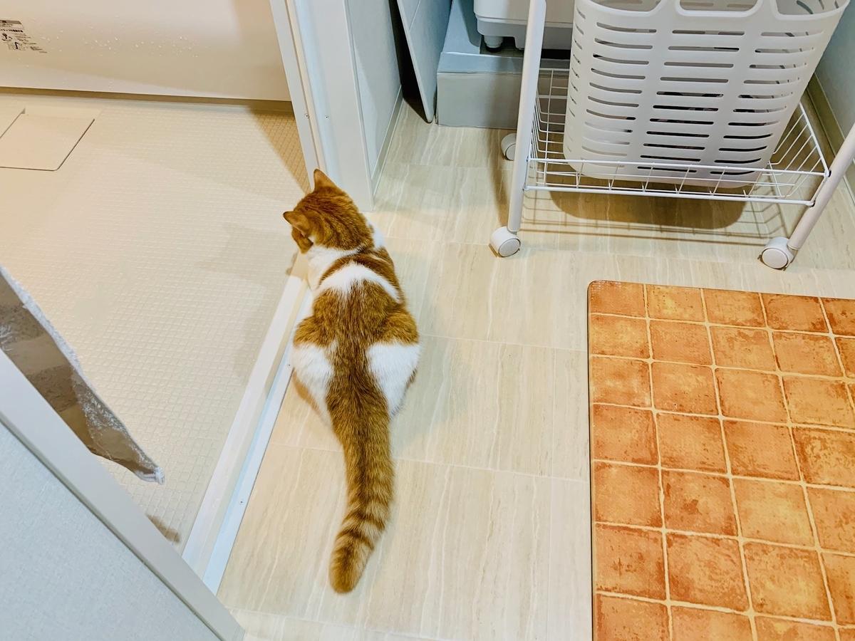 洗面所で待っているるるちゃん3