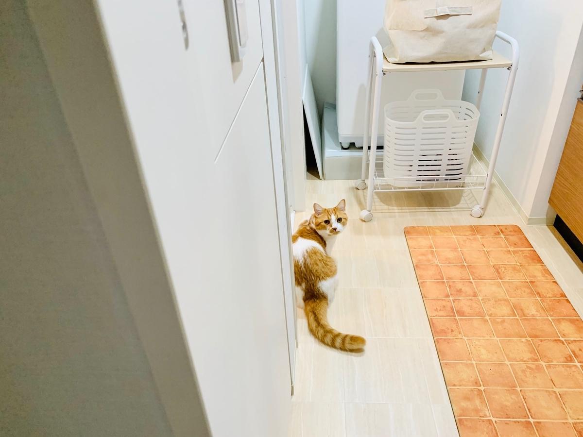 洗面所で待っているるるちゃん2