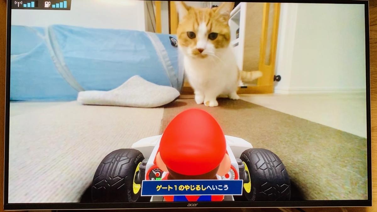 マリオカートライブ画面のるるちゃん3