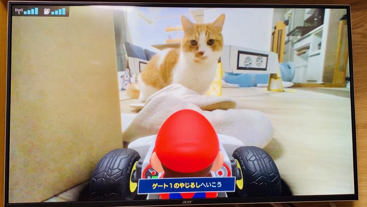 マリオカートライブ画面のるるちゃん2