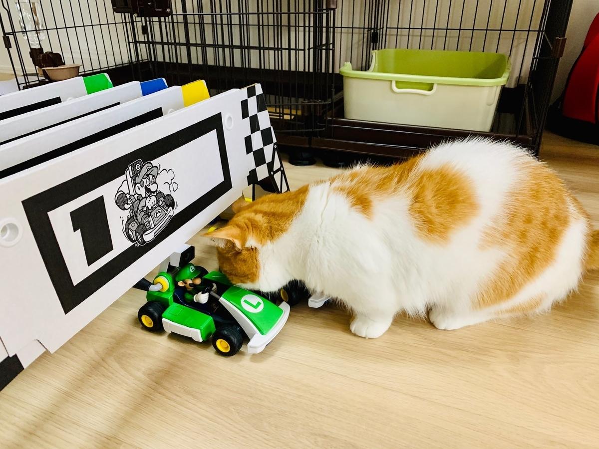 マリオカートライブに興味津々のるるちゃん3