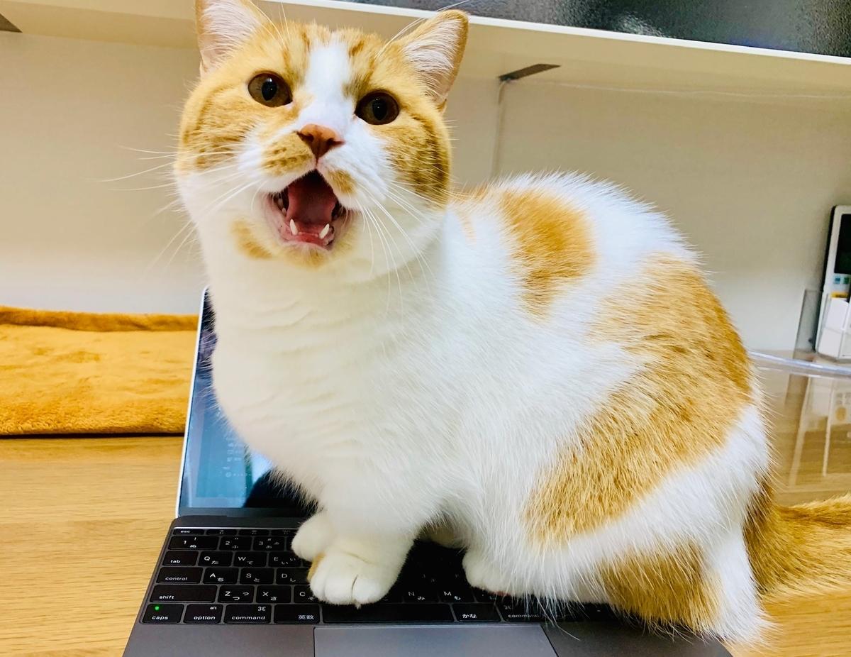 パソコンの上に乗るるるちゃん3
