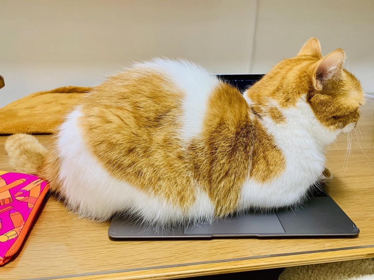 パソコンの上に乗るるるちゃん4