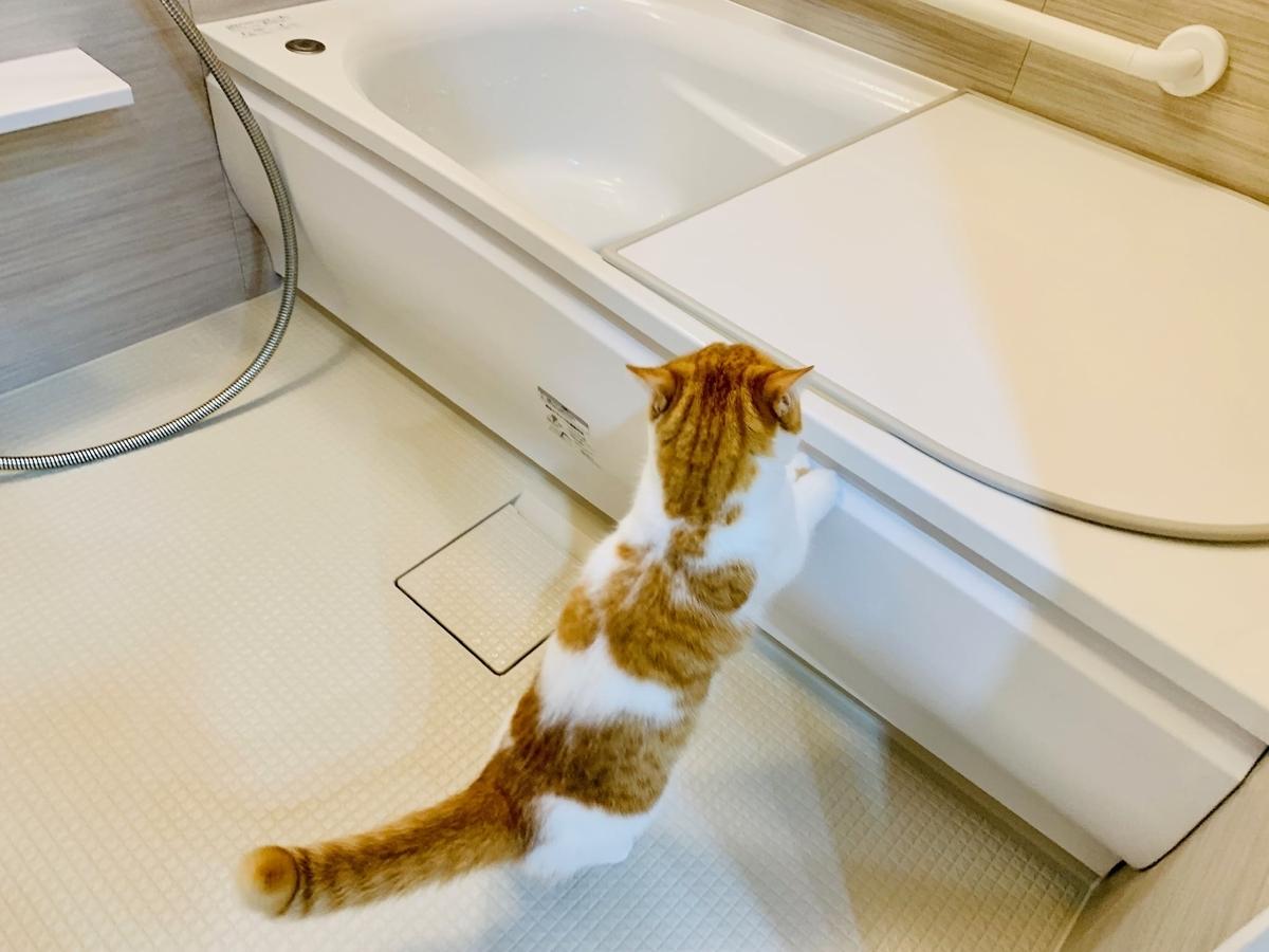 お風呂を探検するるるちゃん1