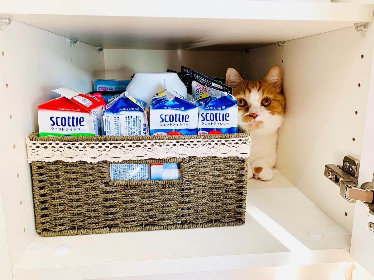 ペットボトルがなくなって一番下の棚に入れたるるちゃん2