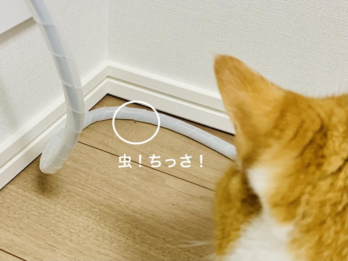 虫を捕まえたいるるちゃん2