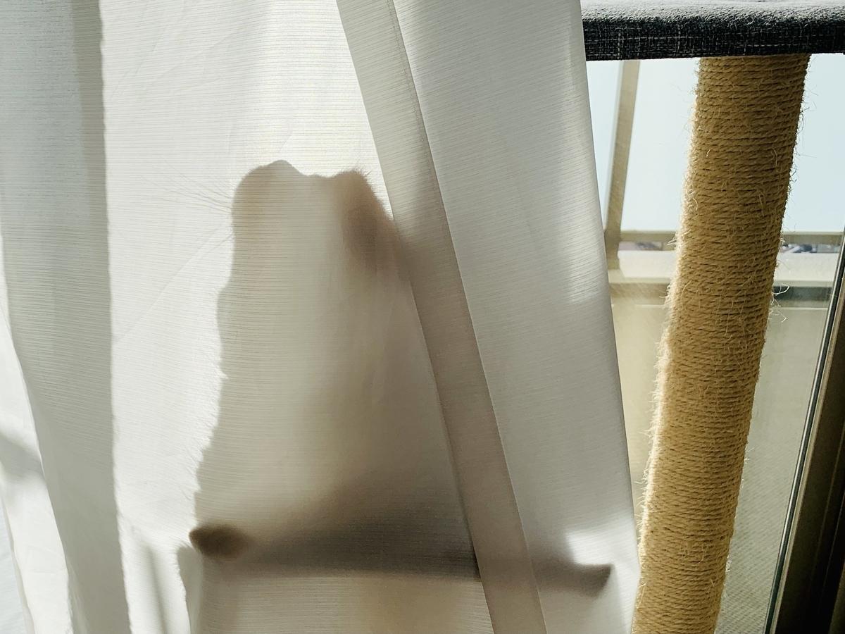 洗い立てのカーテンが気になるるるちゃん3