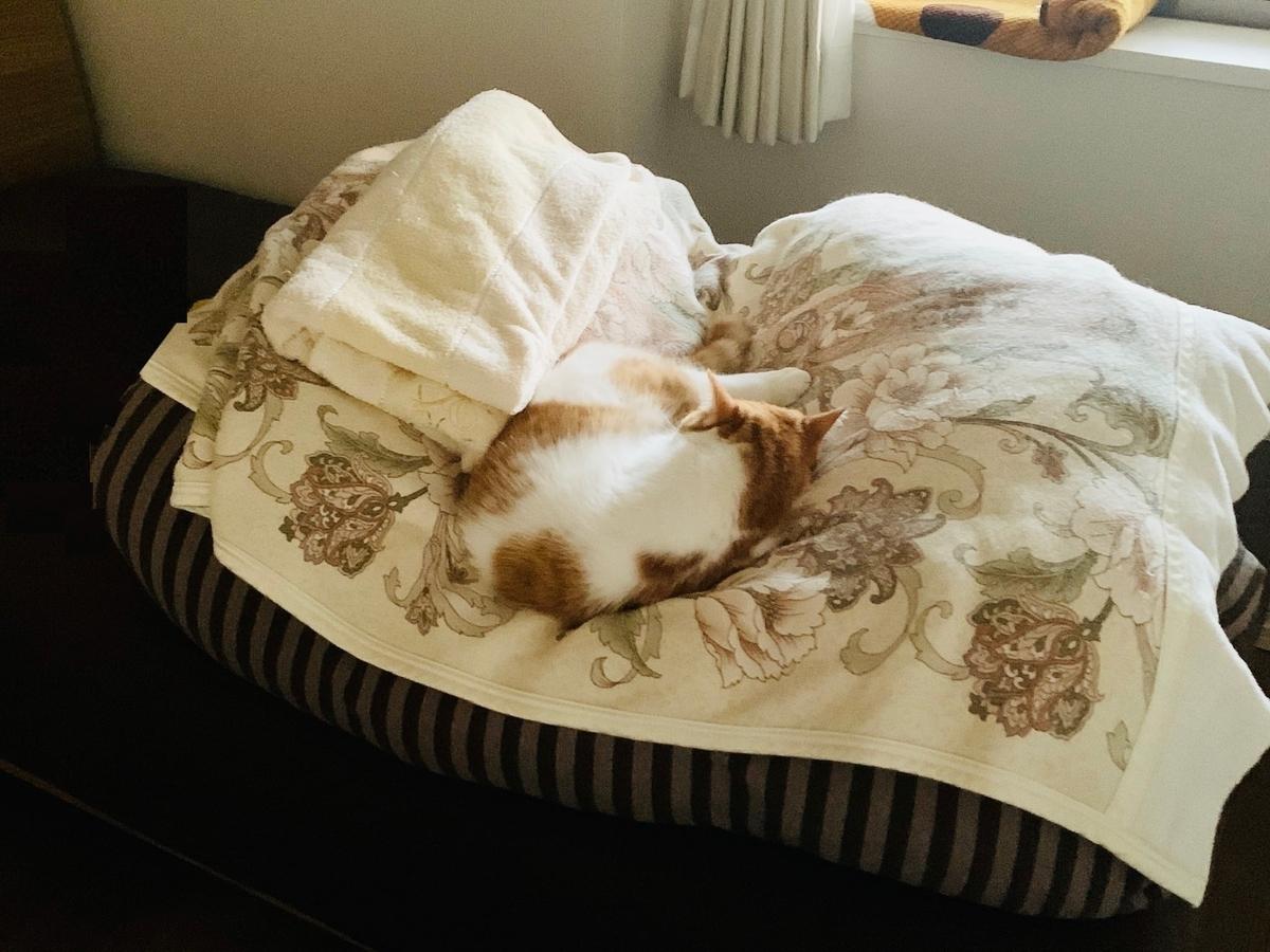 お布団の上でお昼寝中のるるちゃん2