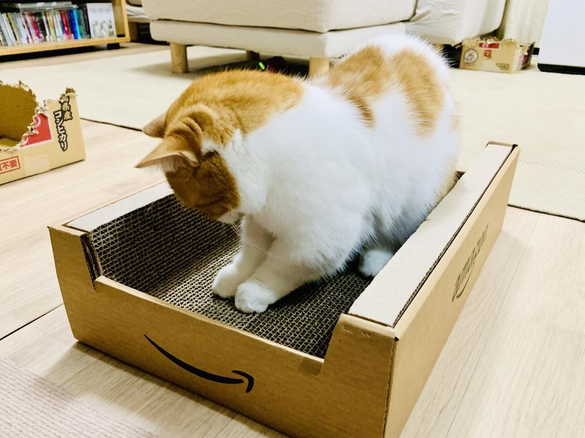 Amazon段ボールに入るるるちゃん2