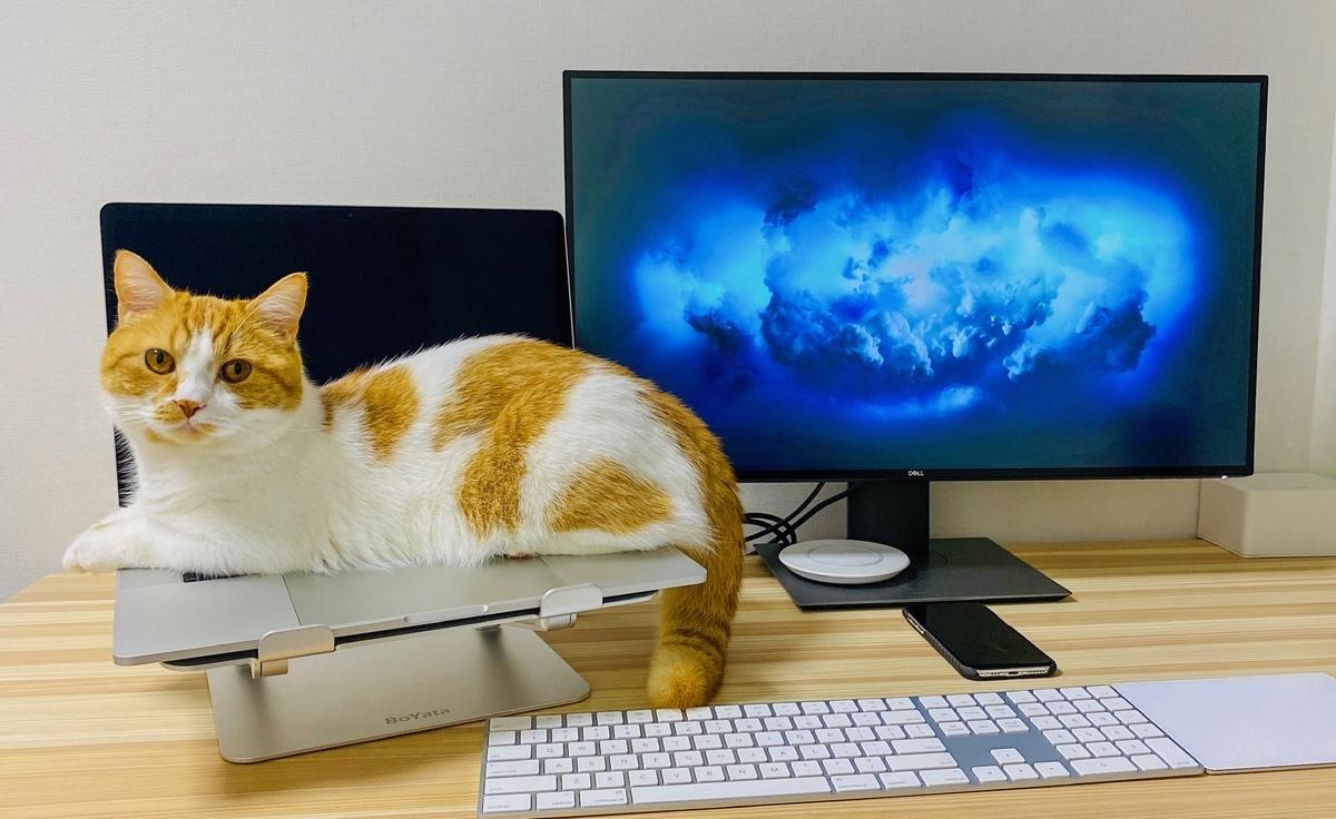 パソコンの上に乗るるるちゃん