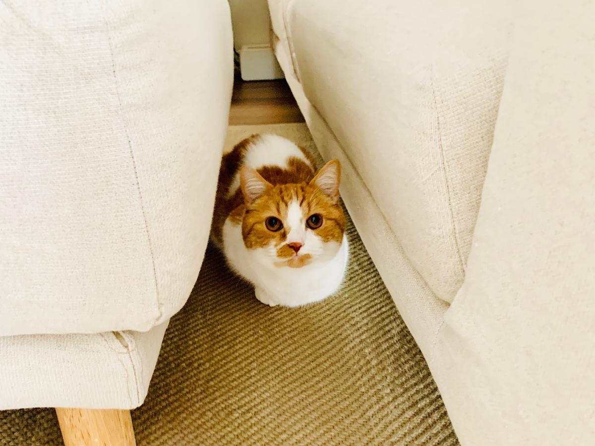 ソファに隠れるるるちゃん