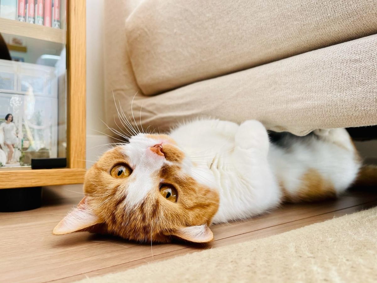 ソファの下に入り込むるるちゃん6
