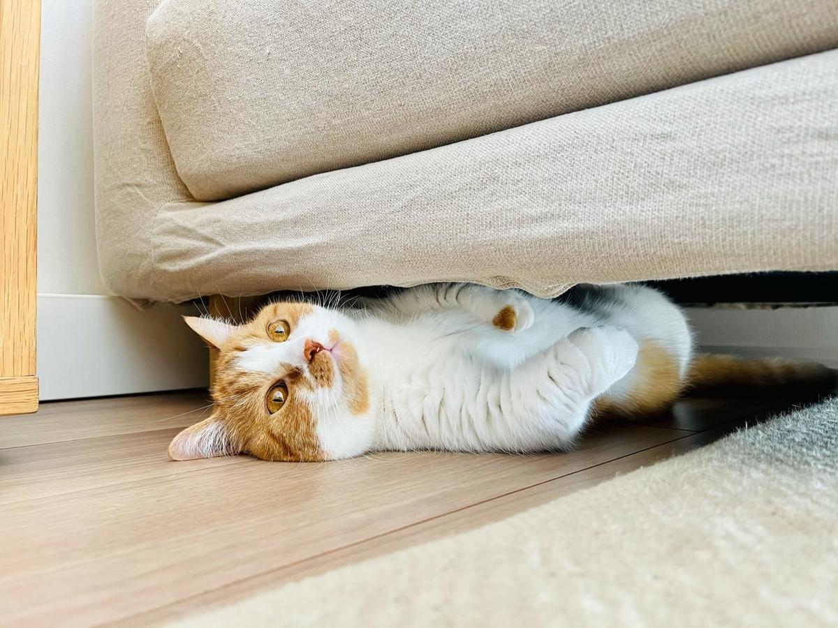 ソファの下に入り込むるるちゃん5