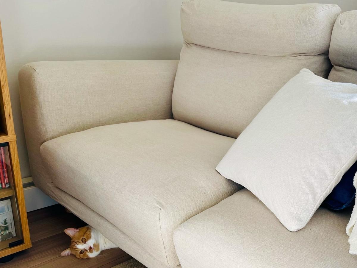 ソファの下に入り込むるるちゃん1