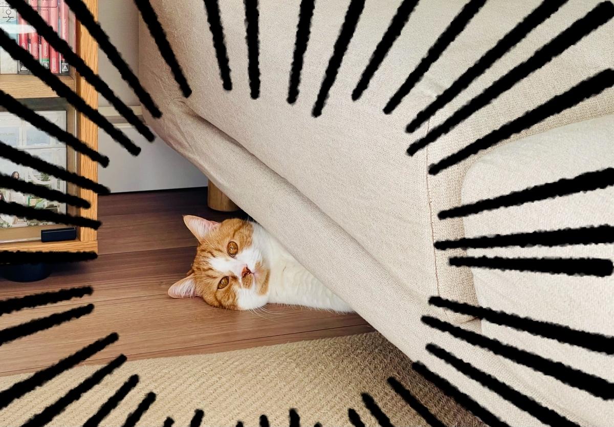 ソファの下に入り込むるるちゃん2