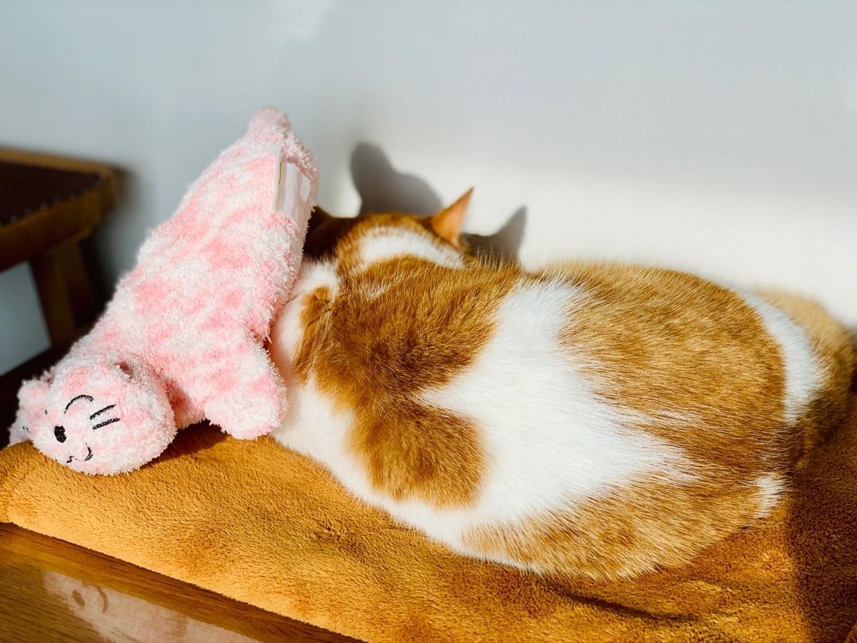 ピンクの猫さんとるるちゃん7