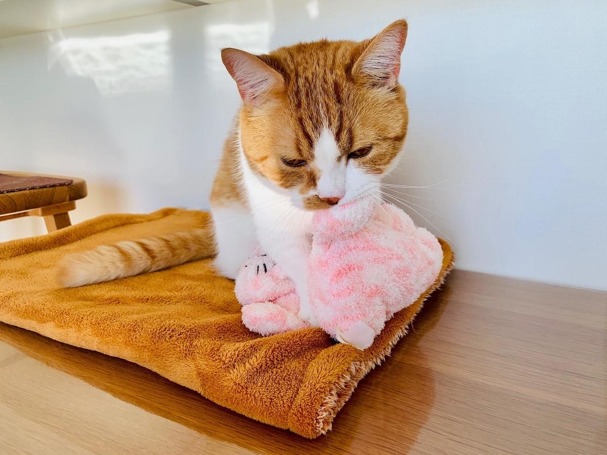 ピンクの猫さんとるるちゃん2