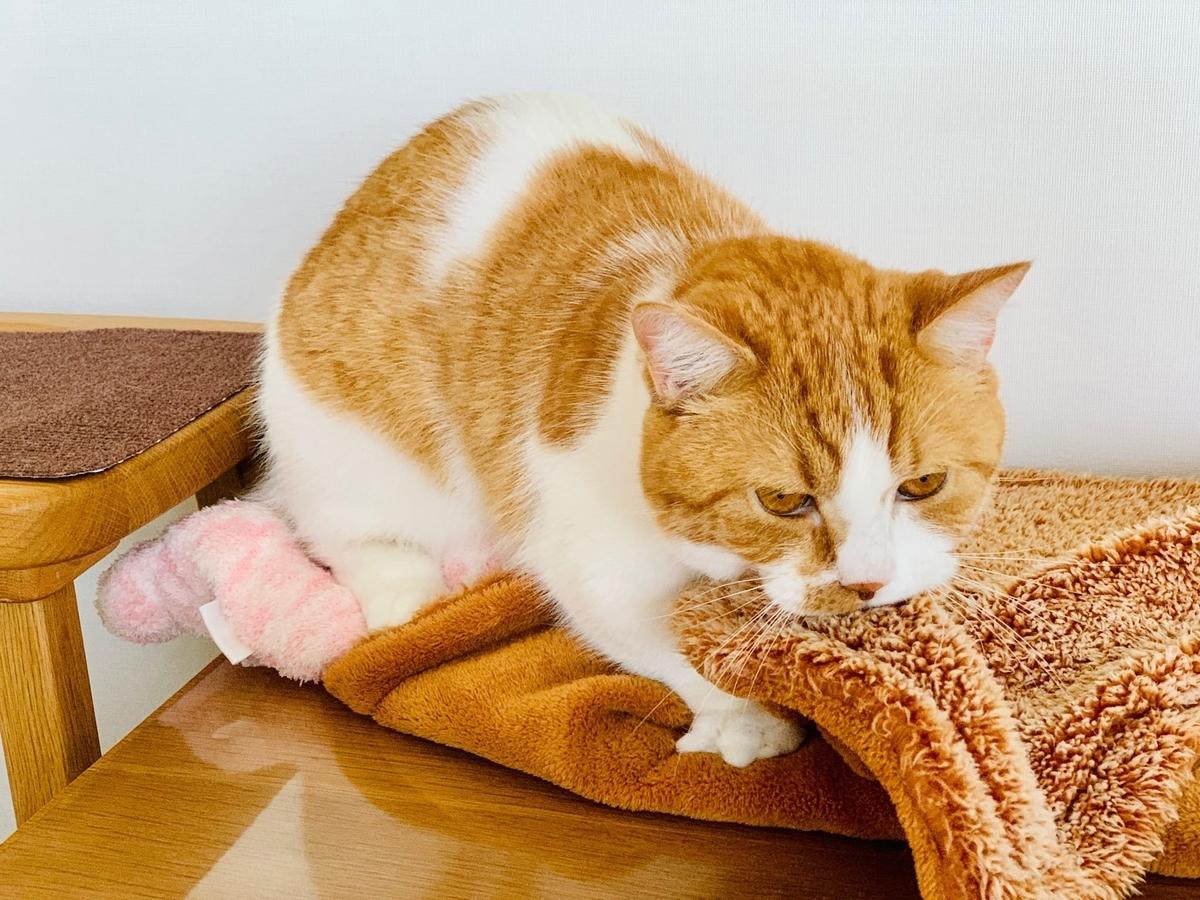 ピンクの猫さんとるるちゃん4