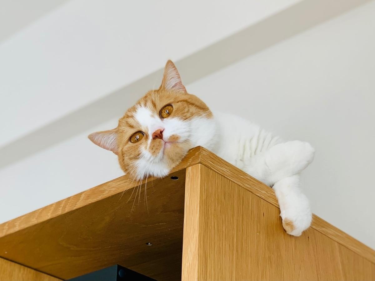 テレビボードの上から見下ろするるちゃん