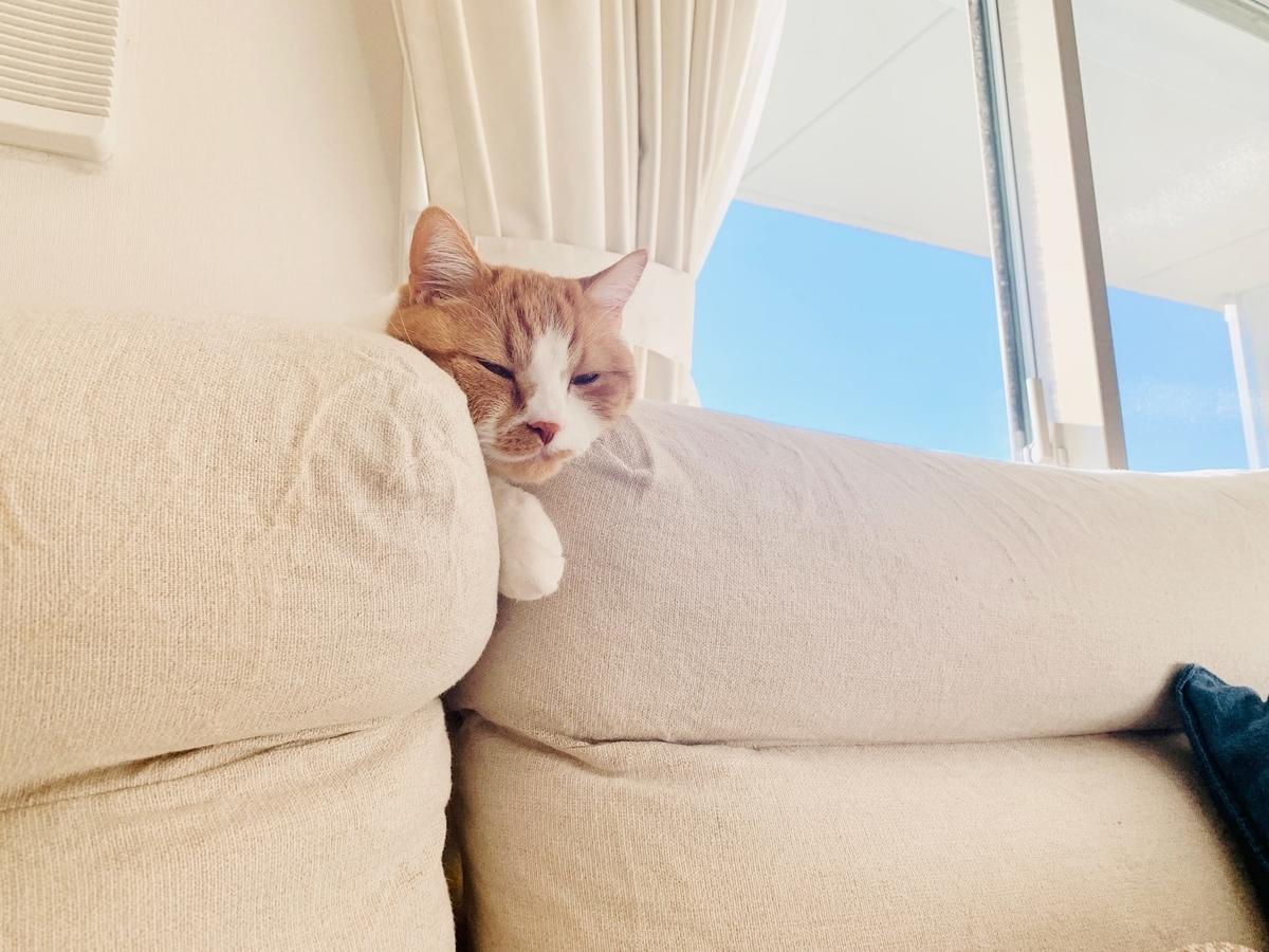 ソファの隙間で寝ちゃうるるちゃん1