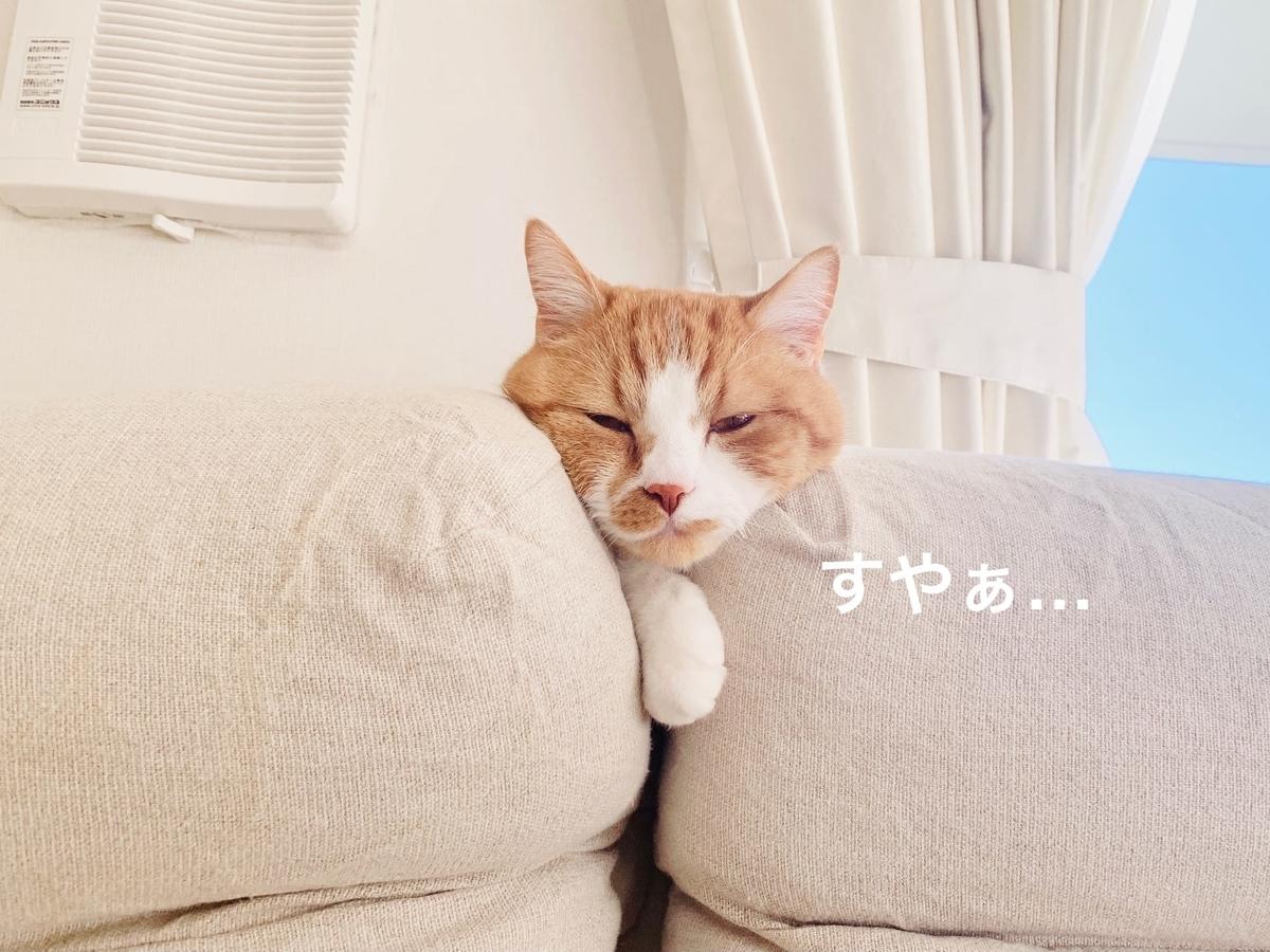 ソファの隙間で寝ちゃうるるちゃん2