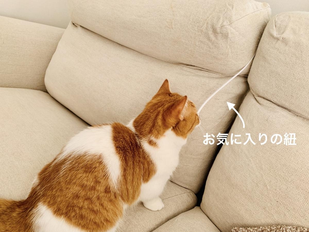 ソファの隙間から紐で遊ぶるるちゃん