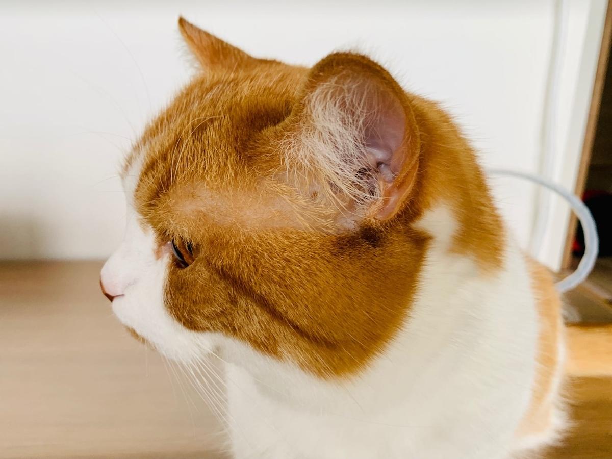 るるちゃんの左耳1