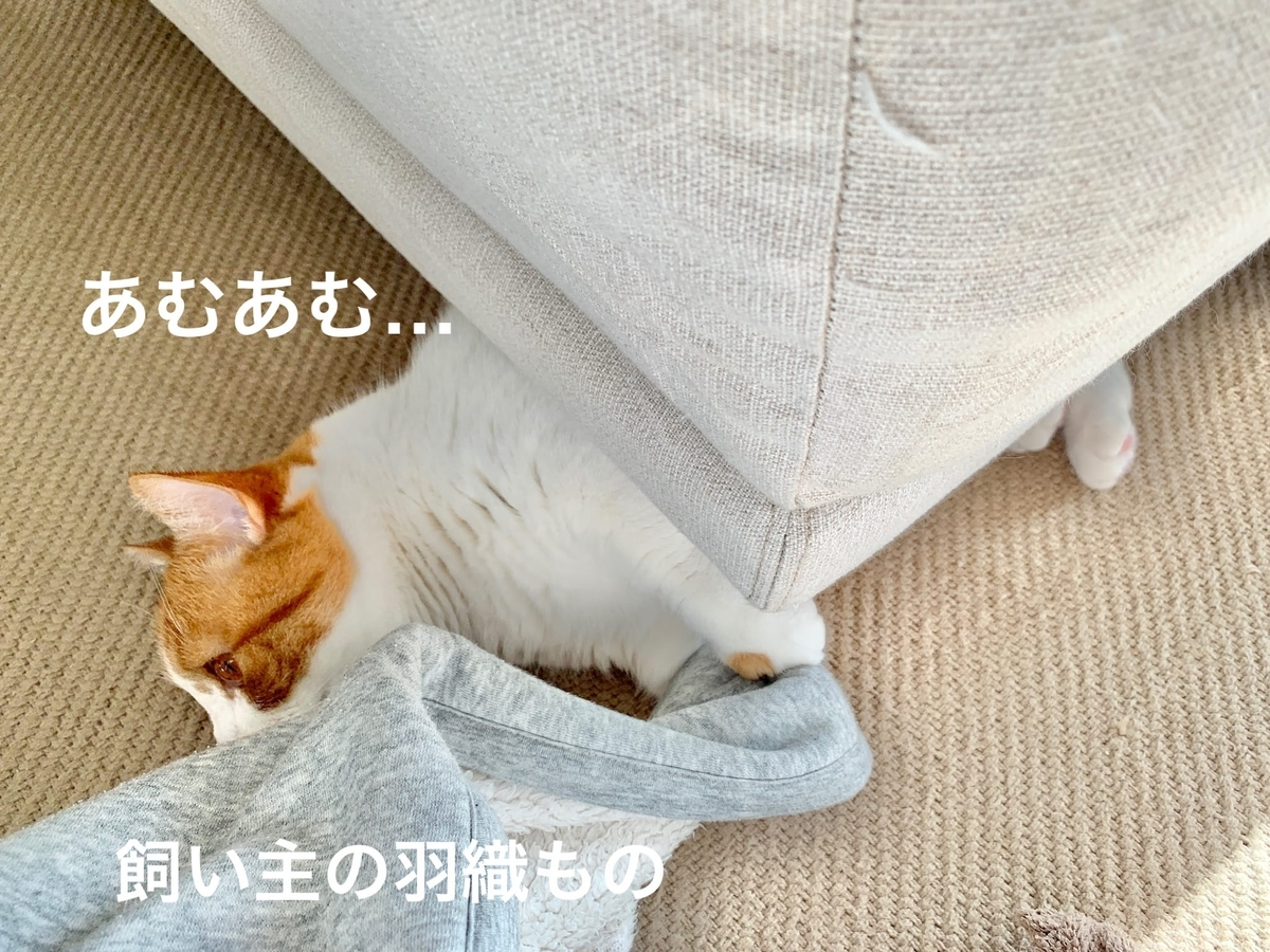 ソファの下に潜むるるちゃん3