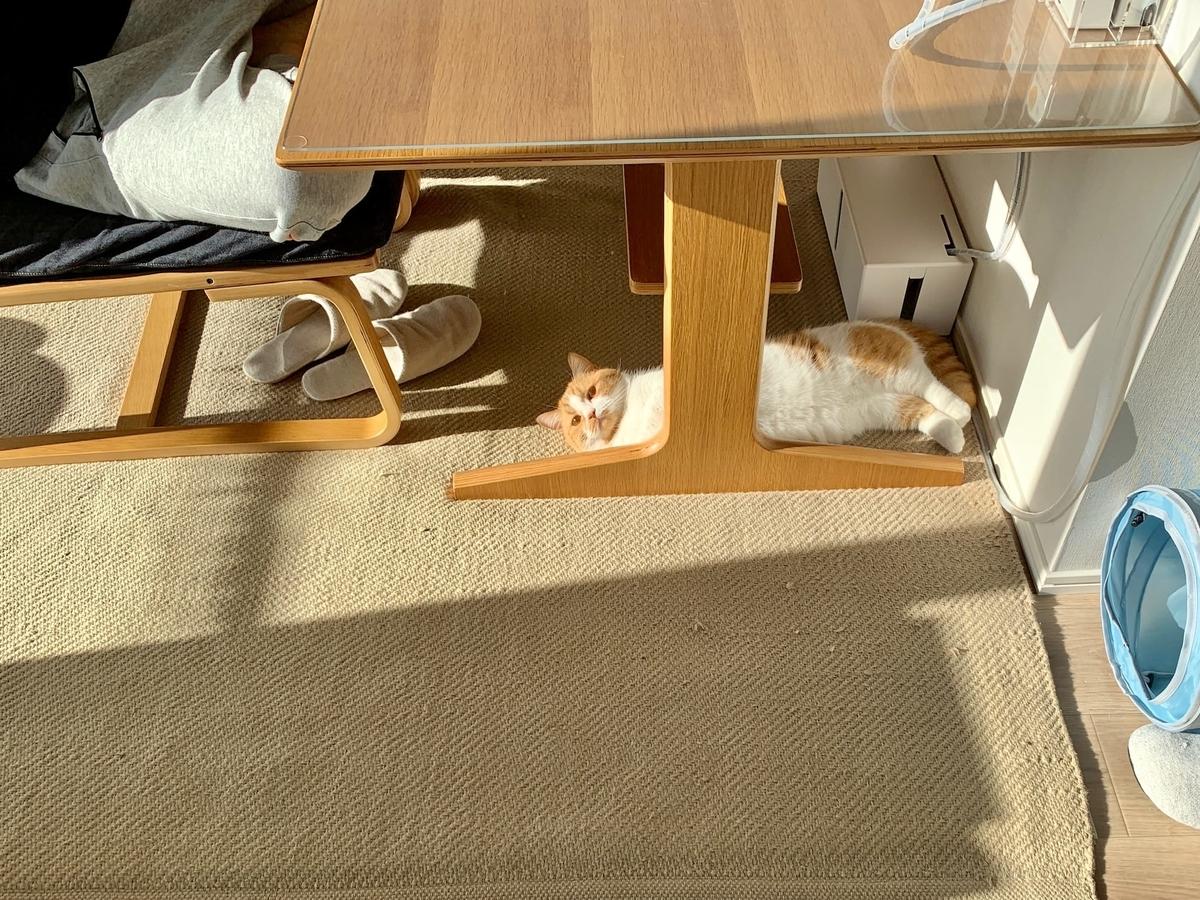 テーブルの下でごろごろするるるちゃん2